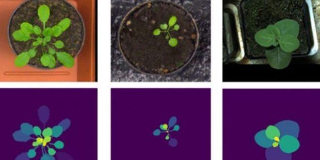 intelligence artificielle prédit le stress hydrique et thermique des plantes