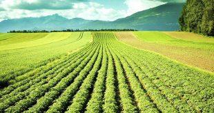 Sécheresse: Subventions et indemnisations des agriculteurs marocains