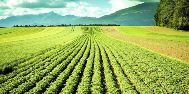 Covid-19-La-Chambre-d-agriculture-de-Souss-Massa-dresse-un-état-des-lieux-du-secteur