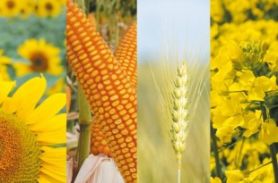 Symposium sur la gestion phytosanitaire des grandes cultures