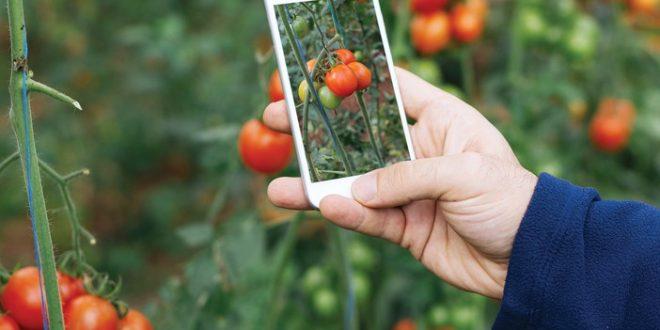 Comment-la-technologie-lutte-contre-les-ravageurs-et-maladies-dans-l-agriculture