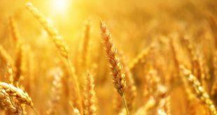 Quelles conséquences auront les températures de Février sur l'agriculture marocaine ?