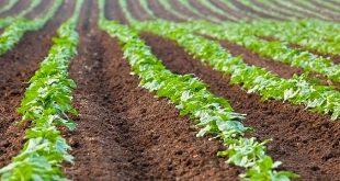 Souss-Massa. L'objectif est à la protection des terres agricoles contre urbanisation