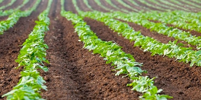 Terres-agricoles-Des-changements-majeurs-dans-l-attribution