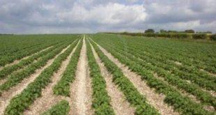Le Maroc sur la bonne voie pour une croissance accélérée de son agriculture ?