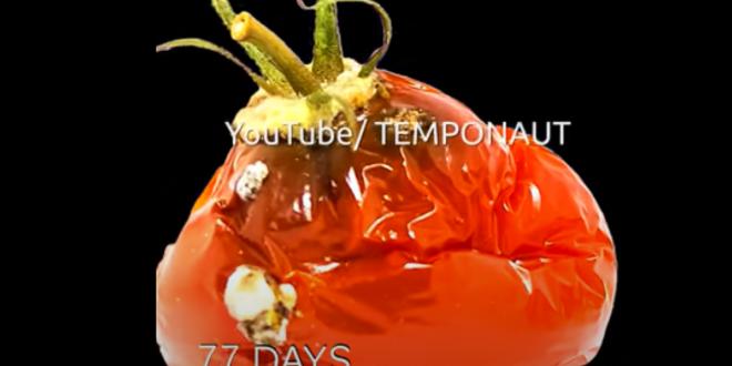 Vidéo : une tomate en train de pourrir fait plus de 14 millions de vues sur YouTube