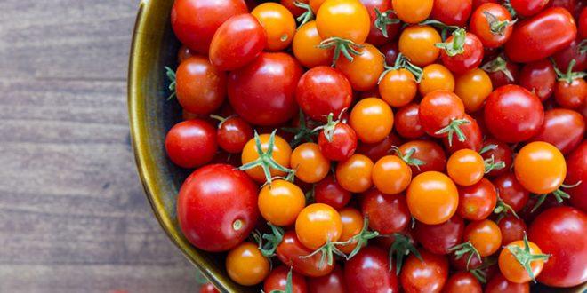 Maroc : les producteurs de tomates sont de plus en plus performants en Europe
