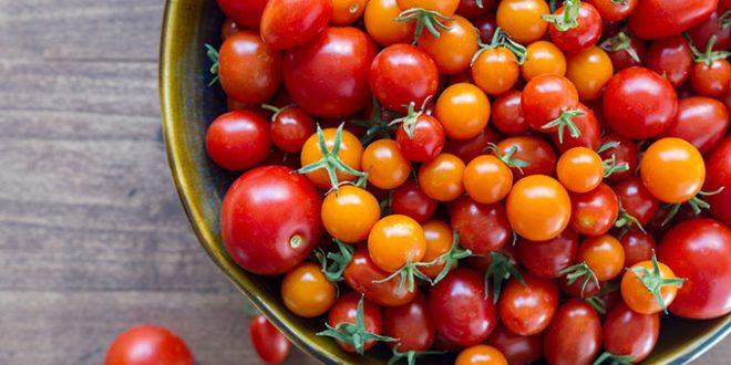 Développement de tomates cerises avec de grandes propriétés anticancéreuses