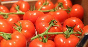 La Turquie exporte pour 280 millions de dollars de tomates dans 60 pays