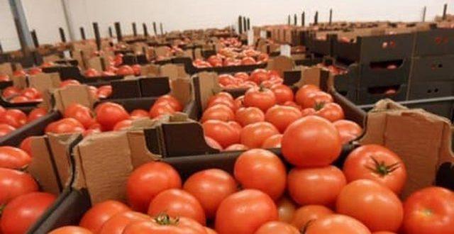 La tomate devient de moins en moins rentable