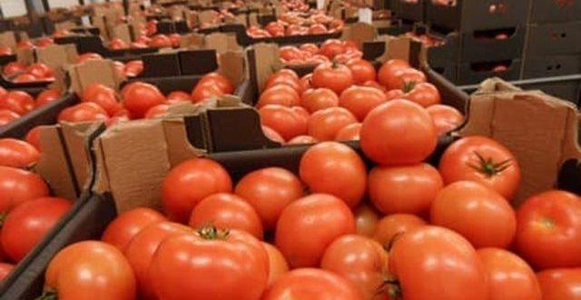 Des-tomates-marocaines-dans-un-supermarché-en-France-font-polémique