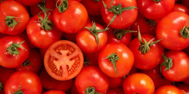 tomate accumulation césium