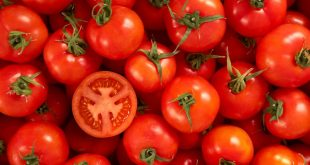 Maroc a exporté plus de tomates Almeria