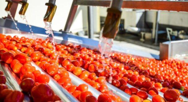 Tomates transformées Italie se classe au premier rang mondial