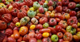 Le Maroc est le leader mondial de l'exportation de tomates