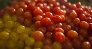 tomates_cerises