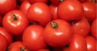 L'Espagne met la main sur la route clandestine qu'empruntent les tomates marocaines