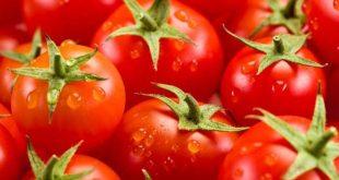 Coronavirus-tomates-marocaines-dans-le-rouge