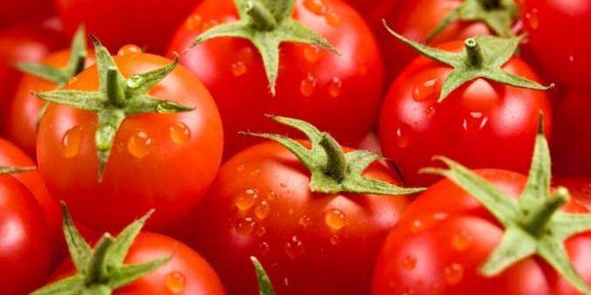 eau recyclée pour les tomates de serre