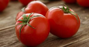Almeria baisse drastique des prix des tomates