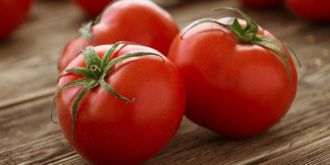 Allemagne baisse des importations de tomates marocaines
