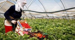 L-ONU-crie-au-scandale-sur-les-conditions-des-saisonnières-marocaines-en-Espagne