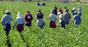 France démantèlement grand réseau de travailleurs agricoles marocains