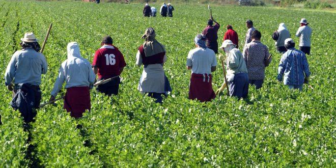 Italie ouvriers agricoles saisonniers