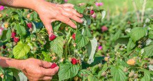 Covid-19-UE-demande-l-ouverture-des-frontières-aux-travailleurs-agricoles