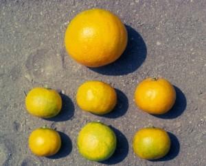 Malformation des fruits qui sont de petite taille