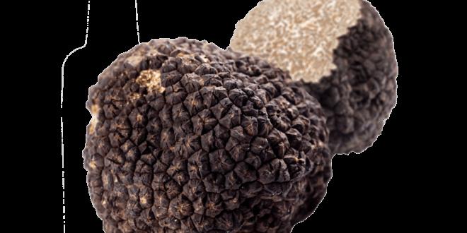 truffe noire trésor agricole