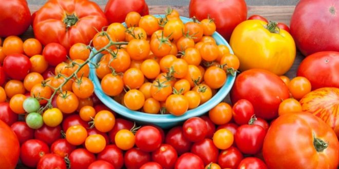 Espagne : les tomates bio coûtent 35% plus chères que celles conventionnelles