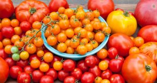 Le Maroc a fortement augmenté ses exportations de tomates en Allemagne