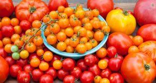 Le Maroc est le 4ème fournisseur de l'Allemagne en tomates
