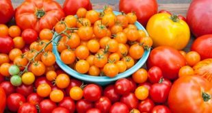 Tomates les prix augmentent de 10% sur le marché européen