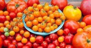 La Russie a augmenté de 20% le quota d'importation de tomates turques