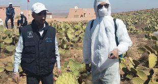 Cochenille du cactus: L'ONSSA déploie sept unités mobiles