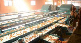 Alerte aux exploitants agricoles et industries agroalimentaires du Maroc