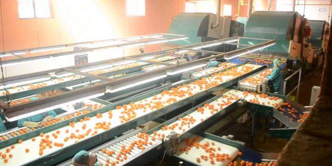 Fruits: 109 millions de dirhams pour une station d'emballage de fruits et légumes à Dakhla