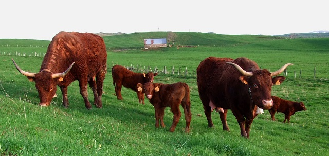 Le cas de « Vache folle » détecté en France à été confirmé