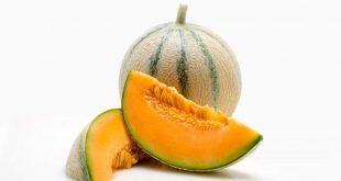 melon charentais variétés Sygenta