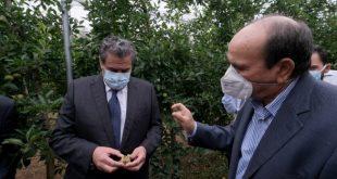 Fès-Meknès: L'ampleur des dégâts de la grêle varie entre 5% et 80% selon les cultures