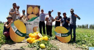 melon jaune bayer variétés