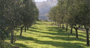 arboriculture jebha